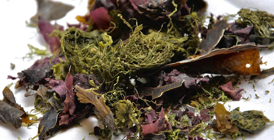 B12 i vegetabilske fødevarer som tang og alger
